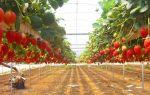 Выращивание клубники как бизнес в домашних условиях круглый год