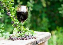 Изготовление виноградного вина в домашних условиях как бизнес: Оборудование
