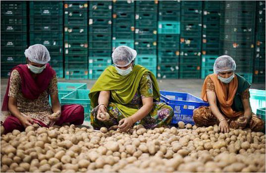 Чем заняться в деревне чтобы заработать денег: Бизнес идеи