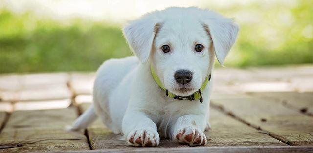 Выгодно или нет разведение собак как бизнес с нуля: С чего начать?