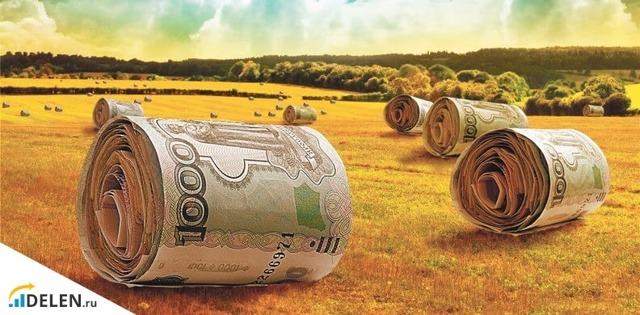 Как получить грант на развитие фермерского хозяйства в 2020 году начинающему предпринимателю