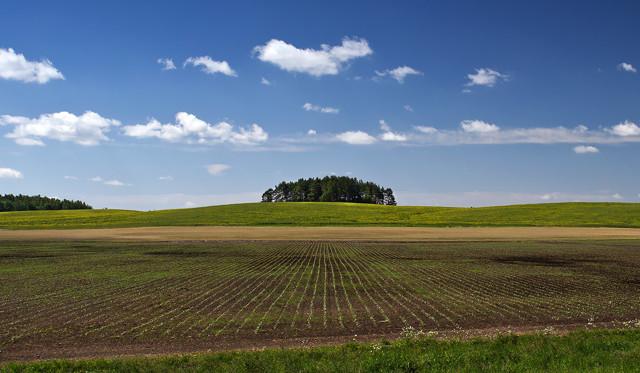 Как стать фермером с нуля: С чего начать?