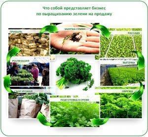 Выращивание зелени в теплице как бизнес круглогодично в домашних условиях