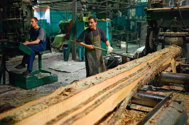 Бизнес на селе с нуля: Идеи заработка в деревне