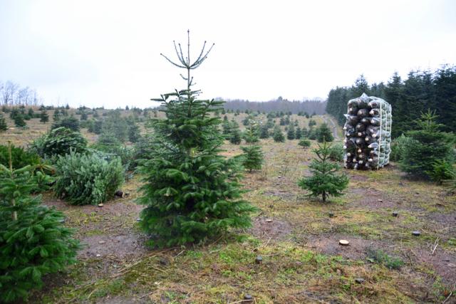 Продажа елок на Новый год как бизнес: Искусственные и живые елки