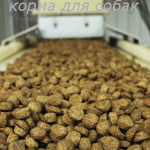 Производство кормов для кошек и собак как бизнес: Оборудование и технология