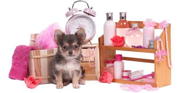 Что это за профессия грумер: Стрижка животных на дому как бизнес с нуля