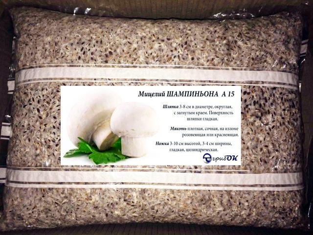 Выращивание шампиньонов как бизнес в домашних условиях для новичков