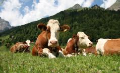 Животноводство как бизнес в домашних условиях