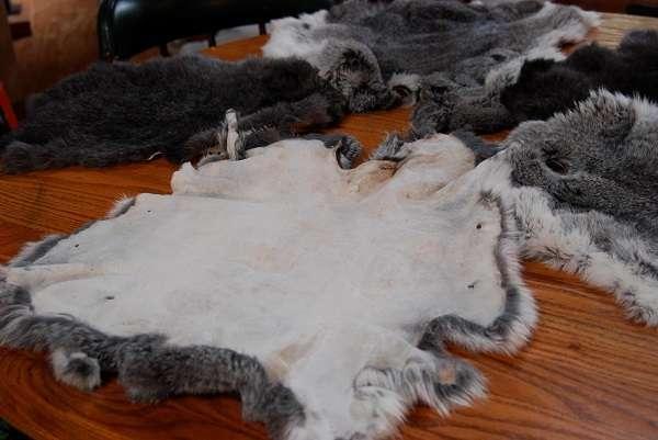 Выделка кроличьих шкурок в домашних условиях как бизнес: Видео