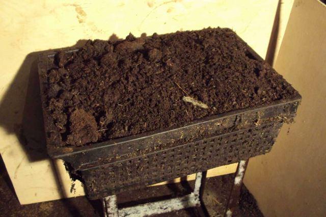 Разведение червей в домашних условиях как бизнес для начинающих с нуля