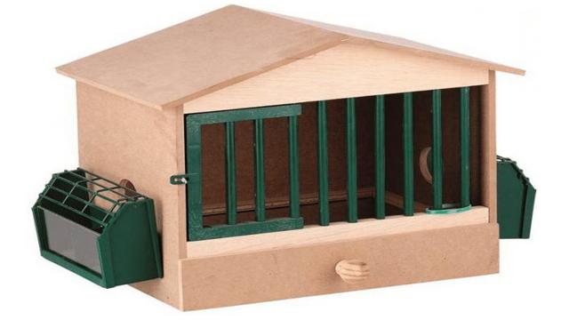 Разведение куропаток в домашних условиях для начинающих как бизнес