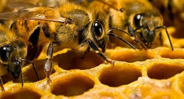 Как разводить пчел: ТОП-3 лучших метода