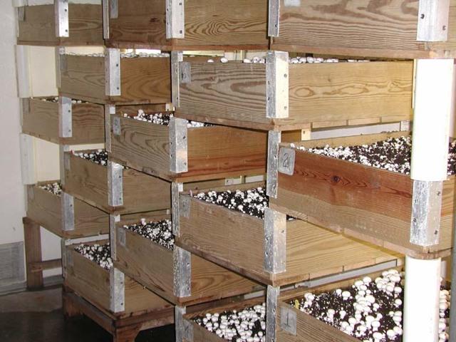 Как выращивать шампиньоны в домашних условиях: детально