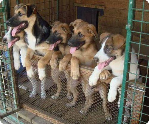 Как открыть приют для животных: пошаговое руководство