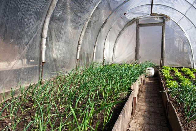 Выращивание зеленого лука: готовый бизнес план