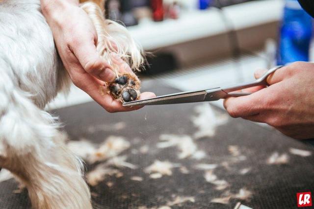 Салон красоты для животных: примерный план с расчетами