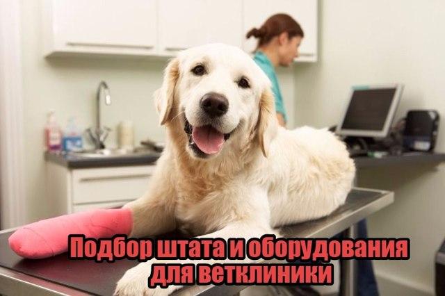 Как открыть ветеринарную клинику: пошаговое руководство