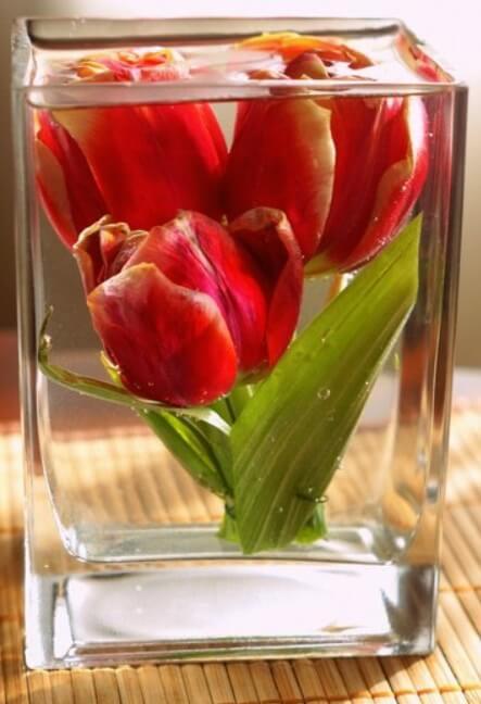 Бизнес-идея цветы в глицерине: 3 этапа реализации + 2 технологии изготовления
