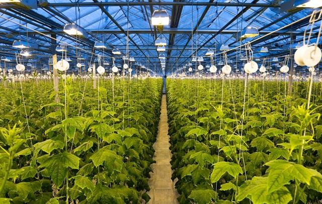 Производство теплиц: организация бизнеса, оборудование, рентабельность