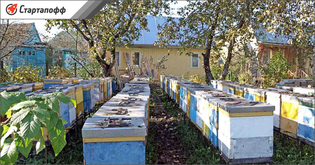 Пчеловодство как бизнес: пошаговое открытие