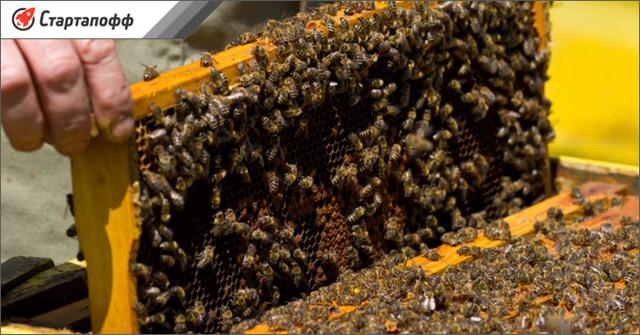Разведение пчел: детальный бизнес план