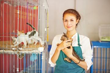 Как открыть приют для кошек: 6 основных этапов