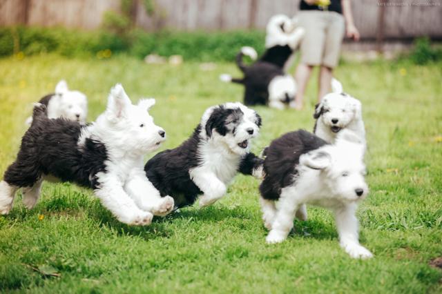 Питомник для собак: руководство по открытию