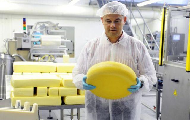 Производство молока в России – условия бизнеса