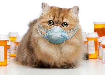 Как открыть ветеринарную аптеку: все что надо знать