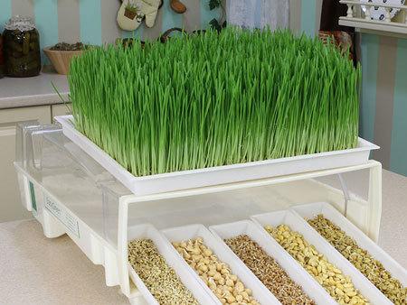 Выращивание зелени как бизнес: пошаговое руководство