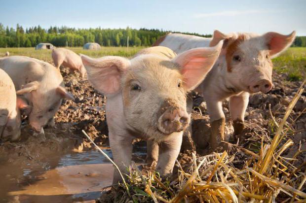 Как открыть фермерское хозяйство: пошагово